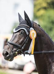 Pferd mit Schleife bei Siegerehrung