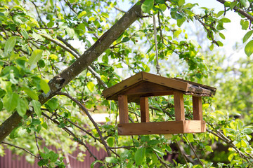 Birdhouse on apple tree