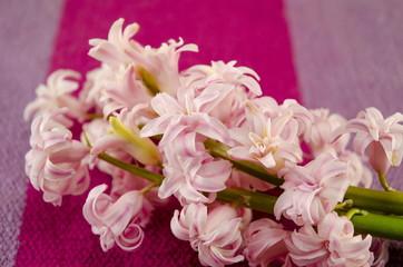 Ffresh flowers hyacinths on coloured tablecloth