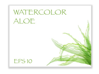 The leaves of medicinal plants - Aloe Vera, vector illustration in watercolor style.