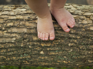 Baby feet are standing on a tree branch.