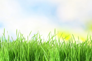 sky  texture and grass field background