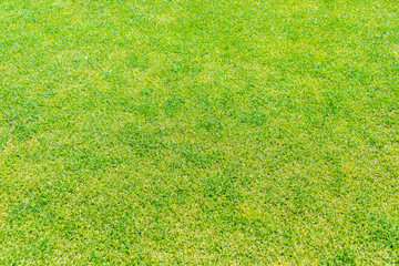 Close up of green grass for your background