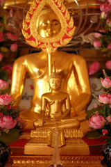gold buddha with pink lotus lateral
