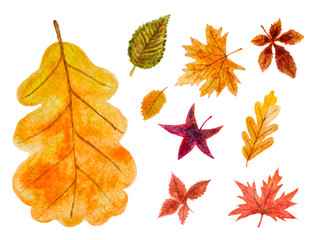 set of autumn leaves. vector watercolor illustration