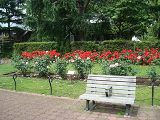 バラが咲く日比谷公園の第一花壇