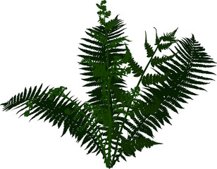 fern bush green silhouette isolated on white
