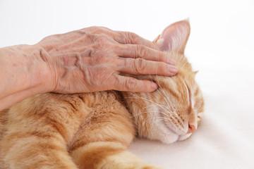 猫を撫でるシニアの手