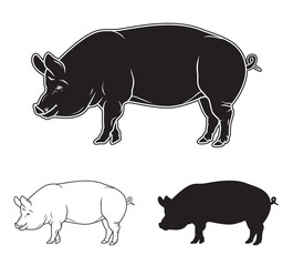 Hand drawn pig set. Vector illustration