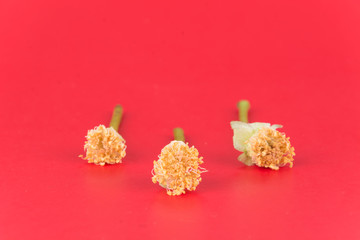 rose pollen on red background