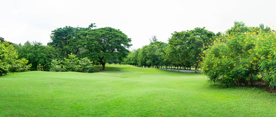 green grass field in big city park panoram