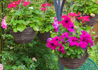 Hanging baskets with purple petunias