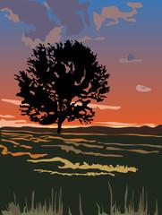 Закат небо одинокое дерево в поле