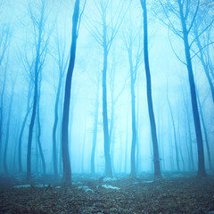 Wall Mural - Magical blue color foggy woodland trees. Beautiful turquoise color in dreamy foggy forrest.