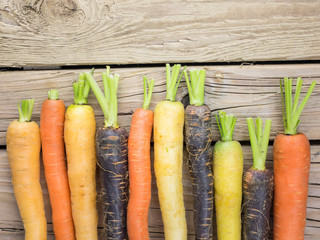 colourful carrot varieties
