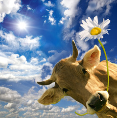 Kuh mit Blume :)