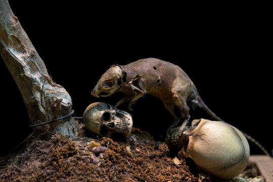 Still Life Skull and Danger Rat zombie