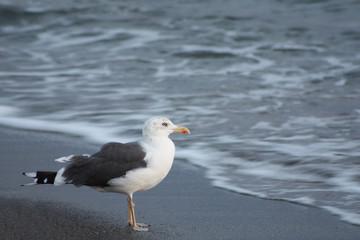Gaviota en la orilla