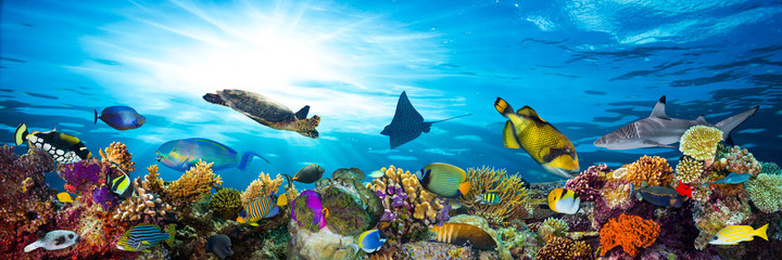 Spoed Fotobehang Koraalriffen underwater sea life coral reef panorama with many fishes and marine animals