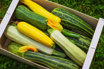Fresh healthy green zucchini courgettes cucumber in brown wooden box