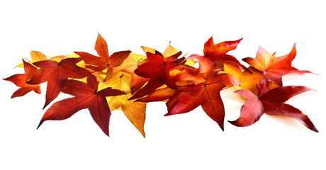 Autumn leaves fallen on white background