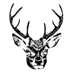 illustration of a deer head, grunge, silhouette isolated on white