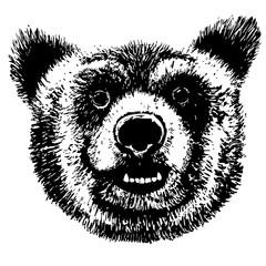Vector hand drawing bear head, grunge