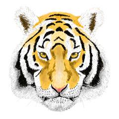 Vector Portrait of a Tiger. Beautiful face big cat.