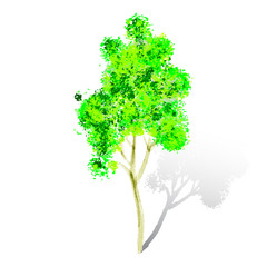 Vector watercolor tree isolated on white background. Watercolor
