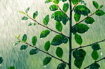 Im Sommerregen