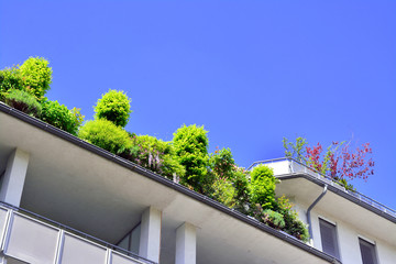 roof with plants