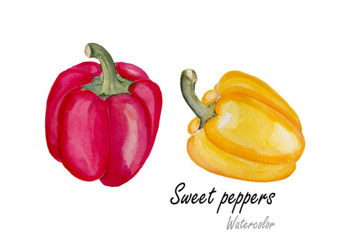 Sweet pepper yellow and red. Hand drawn watercolor painting on white background.Vector illustration