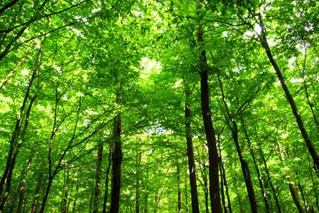 Foto op Aluminium Bossen forest