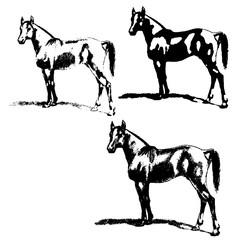Arabian horse, horse, stallion. Set of silhouettes.