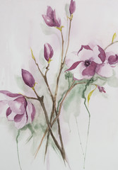 Original watercolour, magnolia flowers.