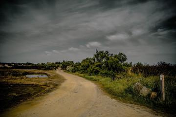 sentier dans les marais