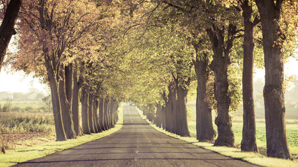 Road running through tree alley. Fototapete