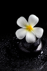 Frangipani flowers, Spa massage