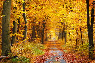 Door stickers Road in forest Autumn forest