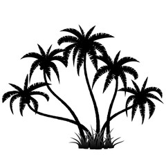 Palm trees silhouette on white, vector illustration