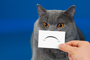 funny unhappy or sad cat