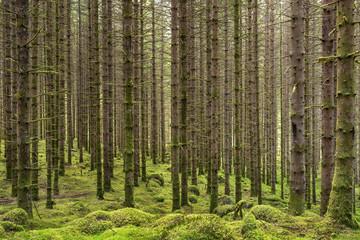 Bäume mit Moos © Matthias Buehner