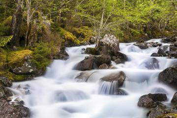 Fluss im Wald © Matthias Buehner
