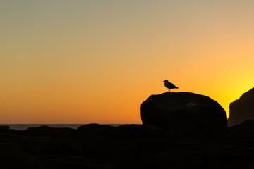 Golden sunset at Curio Bay