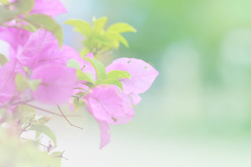 beautiful flowers with soft focus color filters background
