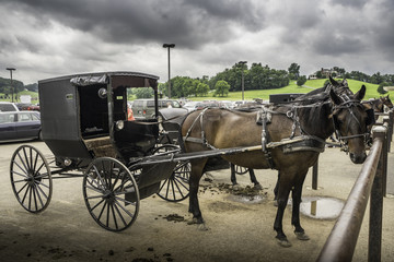 Amish Transportation. Photograph of horse drawn buggy.