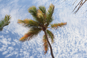 Curved palm tree from below against the sky with small 