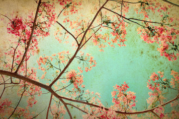 Abstract retro background from Flam-boyant or peacock flowers