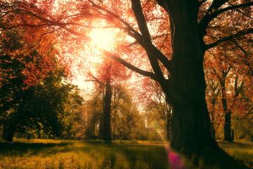 Park with Copper Beech,  Fagus Sylvatica