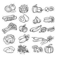 hand drawn vegetable